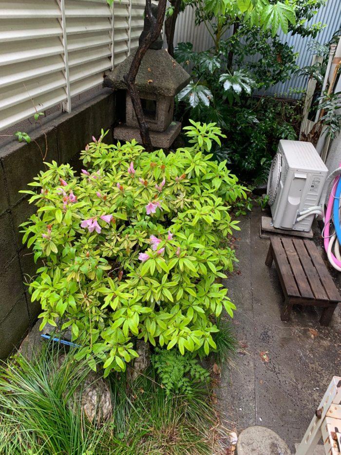 お庭づくり(植栽)と看板デザイン (3)